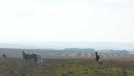 Image of 4 ponies on Llanllwni Mountain